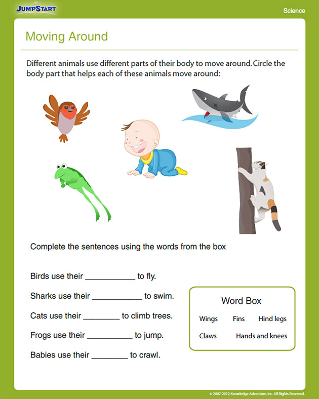 free printable first grade science worksheets