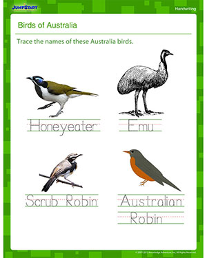 Birds of Australia - Writing Worksheet for Kindergarten