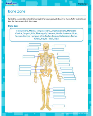 picture regarding 7th Grade Science Worksheets Printable called Bone Zone Human Anatomy Worksheet for 5th Quality JumpStart