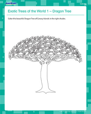 Exotic Trees of the World 1 - 1st Grade Coloring Worksheet