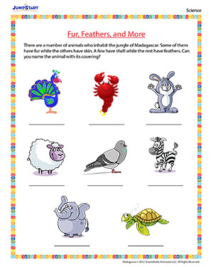 Fur, Feathers, and More - 'Madagascar' movie based worksheet for kids