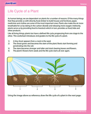 Worksheets Science For 2nd Graders Worksheets life cycle of a plant free 2nd grade science worksheet jumpstart for 2