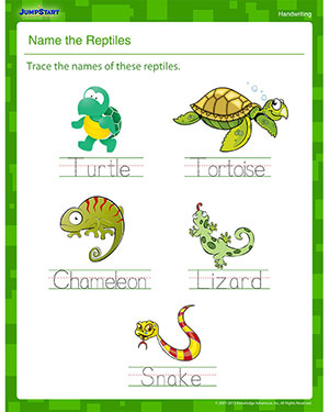 math worksheet : name the reptiles  printable handwriting worksheet  jumpstart : Kindergarten Name Writing Worksheets