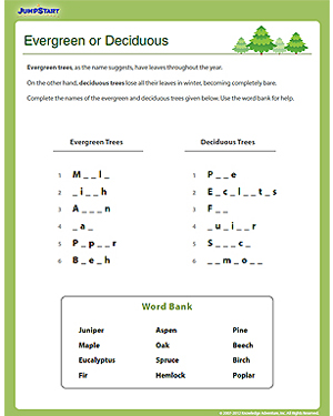 Evergreen or Deciduous? – Free Social Studies Worksheet for Kids ...