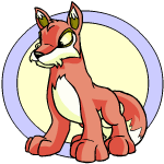 Lupe - Neopets