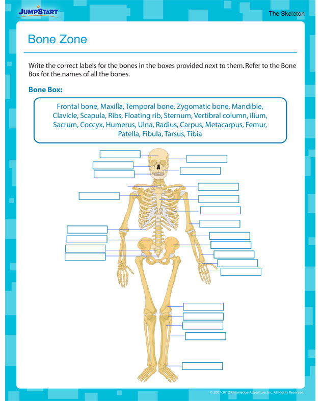 Bone Zone - Free Science Worksheet for Fifth Grade
