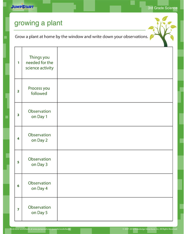 Growing a Plant - Free Science Worksheet
