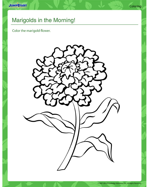 Marigolds in the Morning - Plant coloring worksheets