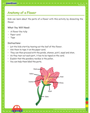 Anatomy of a Flower - Free Cinco de Mayo activity for Kids