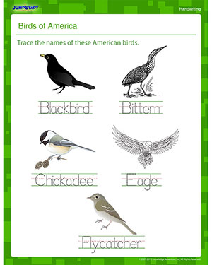 Birds of America - Kindergarten Writing Worksheet