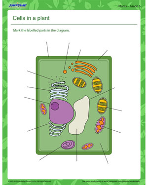 Cells in a Plant - Plant worksheet for kids