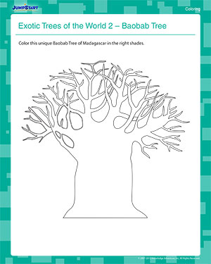 Exotic Trees of the World 2 - First Grade Coloring Worksheet