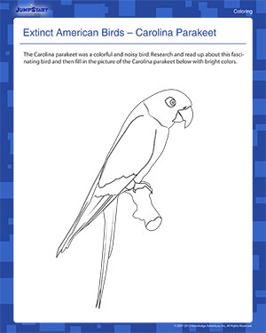 Extinct American Birds 1 - Elementary Coloring Worksheet