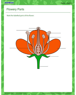Flowery Parts - Plant worksheet for kids