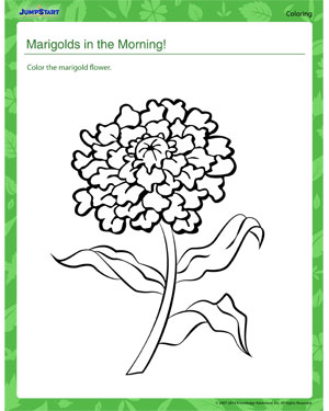 Marigolds in the Morning - Plants coloring page