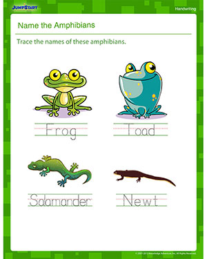 Name the Amphibians - Kindergarten Writing Worksheet