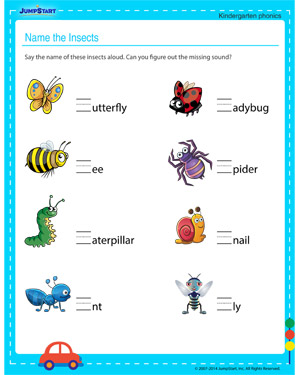 Name the Insects - Free printable worksheet