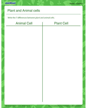 Plant and Animal Cells - Plant worksheet for kids