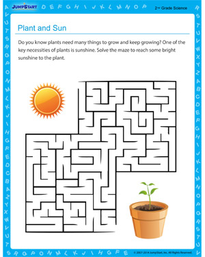 Plant and Sun - Free educational printable for 2nd grade kids
