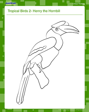 Tropical Birds 2 - Henry the Hornbill - Free Coloring Worksheet for Kids